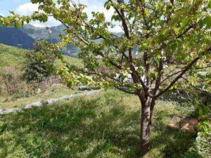 купить черногория дом в горах