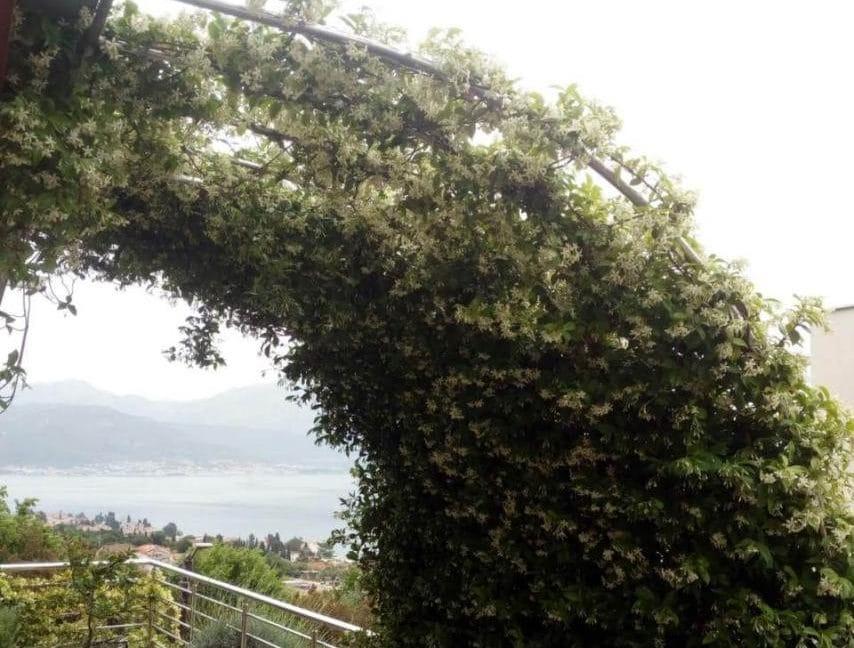 happymontenegro-chernogoria-kvartira-na-more-sad12